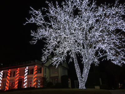 The Christmas Light Company wrapped this stunning tree in Dallas, but  Rathburn declined to give - 65000 For Christmas Lights? Yes, That's A Real Estimate