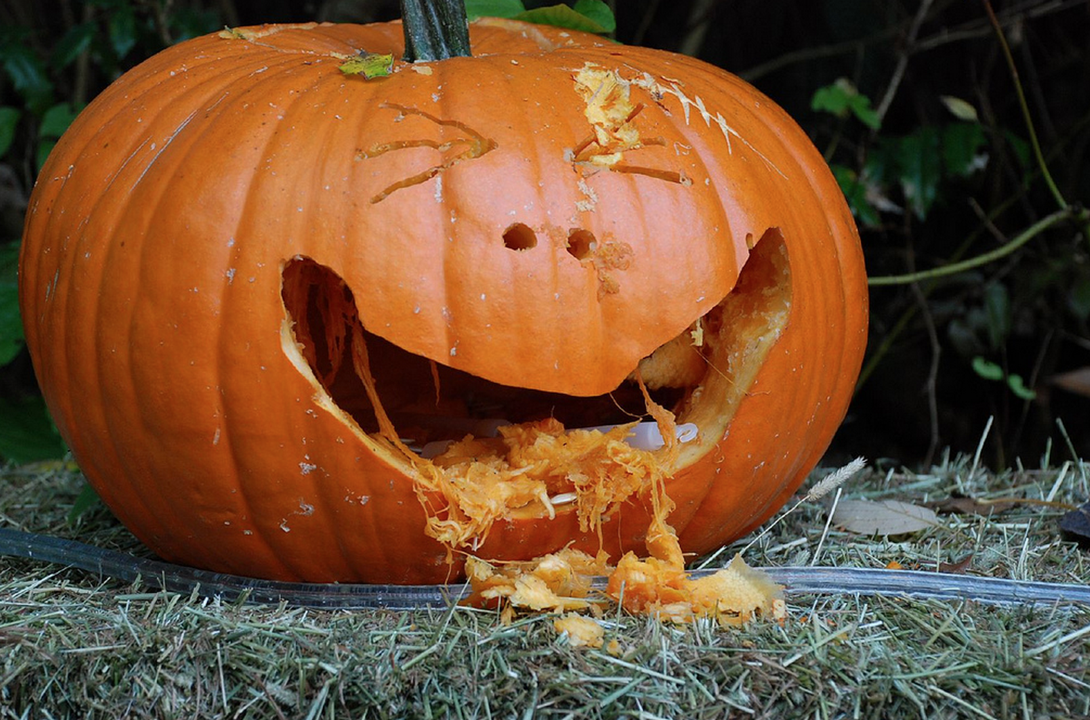 Oh, grow up: 13 things for adults to do for Halloween in D-FW ...