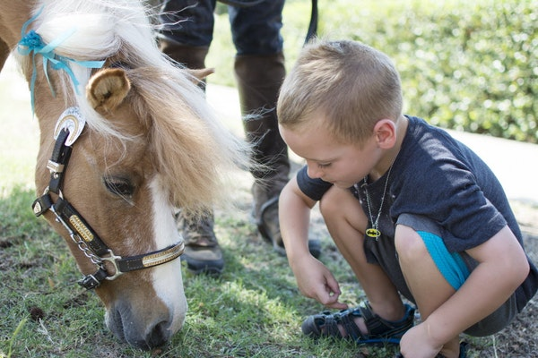 Equine assisted therapy group brings miniature horses to libraries to teach kids