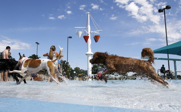9 doggie swim parties coming up in September at Dallas-area pools and water parks