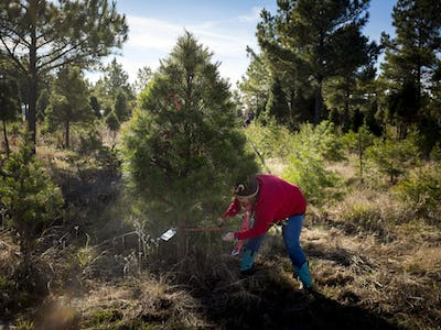 kadee tree farm is one place to start a new family tradition